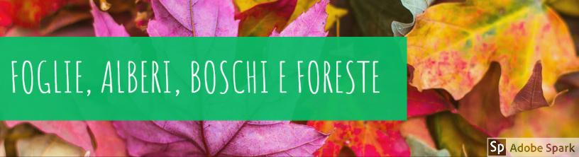 Foglie, alberi, boschi e foreste